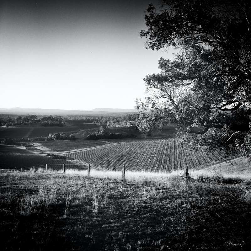 (CreativeWork) The View study #257 by Simon Mitrovich. photograph. Shop online at Bluethumb.