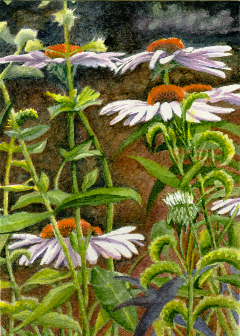 (CreativeWork) Entanglement - Lilac Conehead Daisies by Jillian Crider. Watercolour Paint. Shop online at Bluethumb.