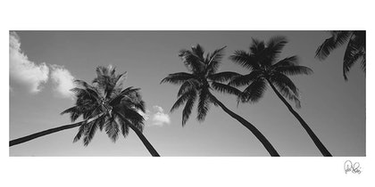 (CreativeWork) P 033 Palm trees  by Peter Henning. photograph. Shop online at Bluethumb.