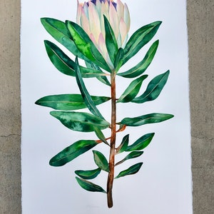 (CreativeWork) Pastel Protea by Kirsty Anderson. watercolour. Shop online at Bluethumb.