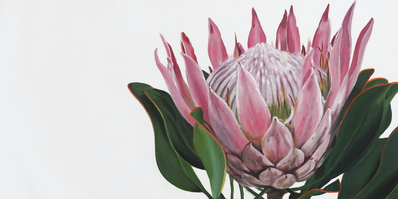 (CreativeWork) Pink King Protea by Naomi Veitch. arcylic-painting. Shop online at Bluethumb.