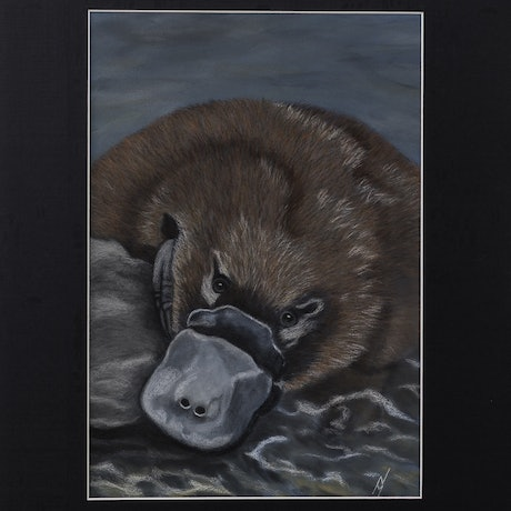 "(CreativeWork) ""Ambrose"" the Platypus by Nyree Mason. Drawings. Shop online at Bluethumb."