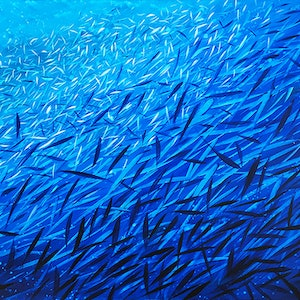 (CreativeWork) Fish Frenzy Large by David Clare. arcylic-painting. Shop online at Bluethumb.