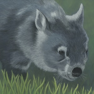 "(CreativeWork) ""Sooty"" the Wombat by Nyree Mason. drawing. Shop online at Bluethumb."