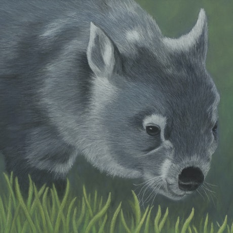 "(CreativeWork) ""Sooty"" the Wombat by Nyree Mason. Drawings. Shop online at Bluethumb."