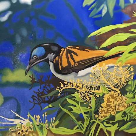 (CreativeWork) Blue Faced Honeyeater by sara bell. Oil Paint. Shop online at Bluethumb.