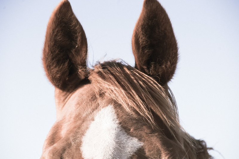(CreativeWork) Ears by Sophie Rogers. photograph. Shop online at Bluethumb.