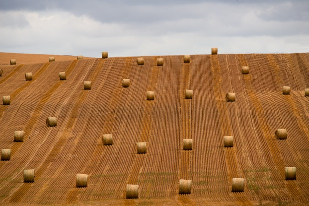 (CreativeWork) Hay bales in a line Ed. 1 of 1 by Wendy Philip. Photograph. Shop online at Bluethumb.