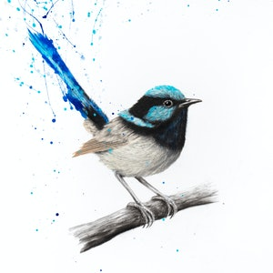 (CreativeWork) Wren Whisper - Limited Edition Print-  Ed. 5 of 100 by Ashvin Harrison. print. Shop online at Bluethumb.