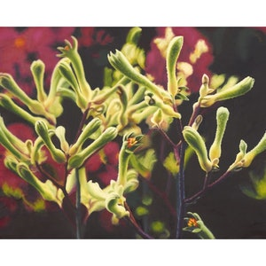 (CreativeWork) Kangaroo Paws - A3 Limited Edition print  Ed. 1 of 25 by Hetty Thompson. print. Shop online at Bluethumb.