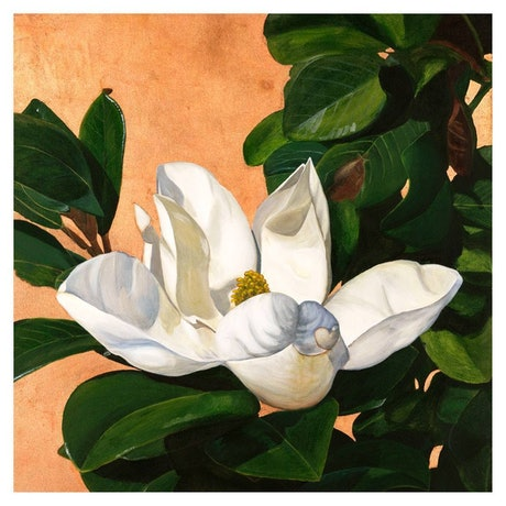(CreativeWork) Steel Magnolia 76cm (W) x 76cm (H) Print Ed. 10 of 100 by Hayley Kruger. Print. Shop online at Bluethumb.