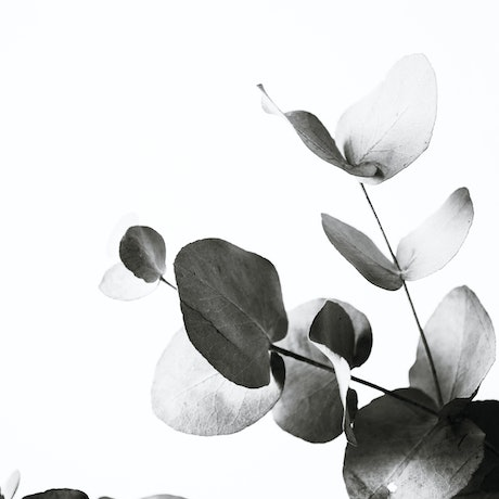 (CreativeWork) Eucalyptus II Ed. 1 of 20 by Elizabeth Hosking. Photograph. Shop online at Bluethumb.