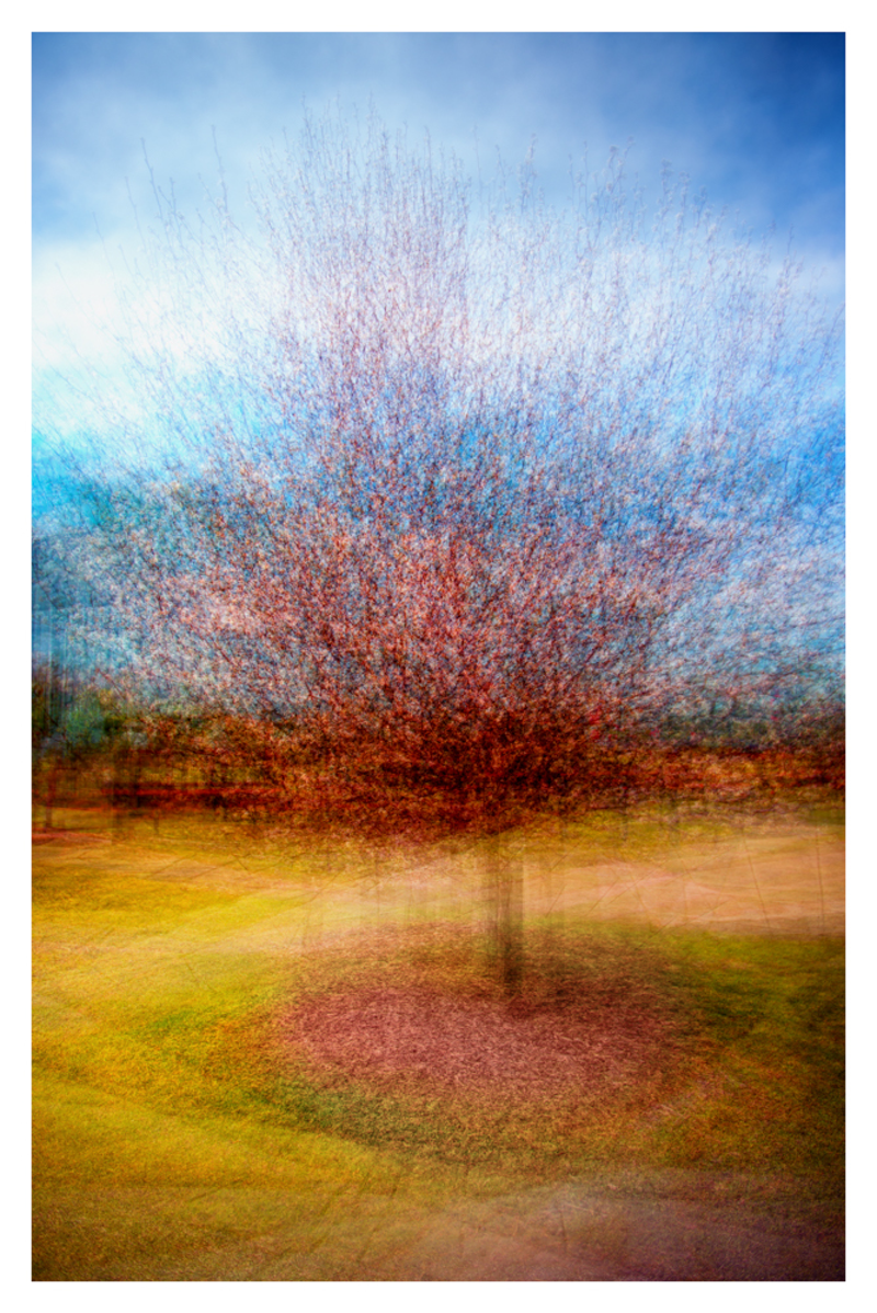 (CreativeWork) Spring time by Joseph Remi d'Argent. photograph. Shop online at Bluethumb.