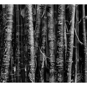 (CreativeWork) P 039 Bamboo in B.&W. Ed. 1 of 200 by Peter Henning. photograph. Shop online at Bluethumb.