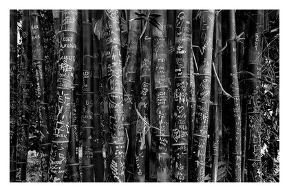 (CreativeWork) P 039 Bamboo in B.&W. by Peter Henning. photograph. Shop online at Bluethumb.