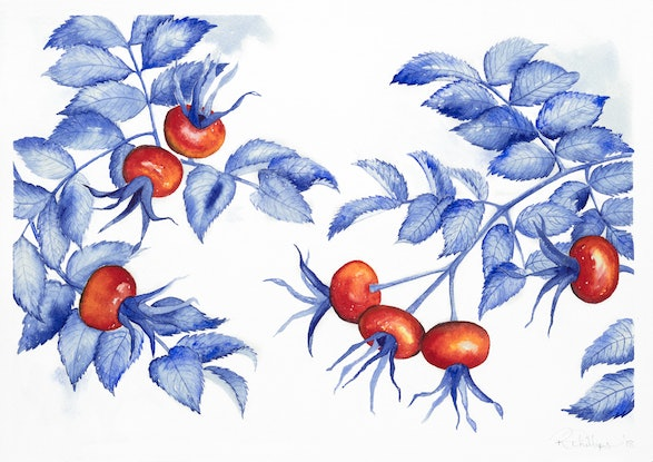 (CreativeWork) Rosehips by Rebecca Phillips. Watercolour Paint. Shop online at Bluethumb.