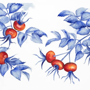 (CreativeWork) Rosehips by Rebecca Phillips. watercolour. Shop online at Bluethumb.