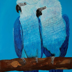 (CreativeWork) Blue Macaw by SUDAY AA. arcylic-painting. Shop online at Bluethumb.