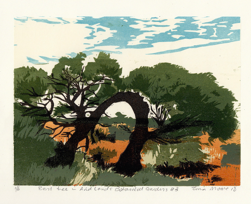 (CreativeWork) Bent Tree in Arid Lands Botanical gardens #3 Ed. 1 of 1 by Tina Moore. print. Shop online at Bluethumb.
