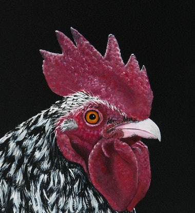 (CreativeWork) Hen- Pymouth Rock- Original Painting by Johanna Larkin. Acrylic Paint. Shop online at Bluethumb.