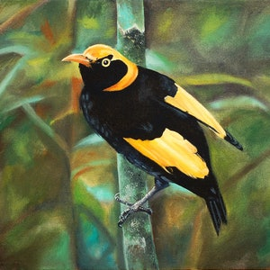 (CreativeWork) Regent Bowerbird by Rhonda Armistead. oil-painting. Shop online at Bluethumb.