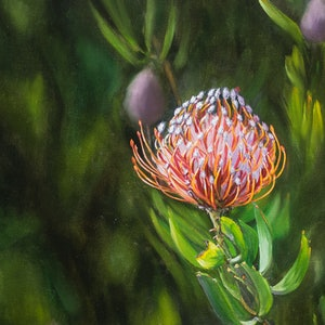 (CreativeWork) Protea  African native flower by Keili Major. oil-painting. Shop online at Bluethumb.