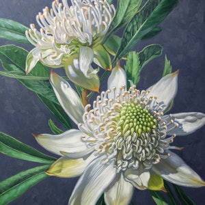 (CreativeWork) Two White Waratahs on Indigo by Fiona Craig. oil-painting. Shop online at Bluethumb.
