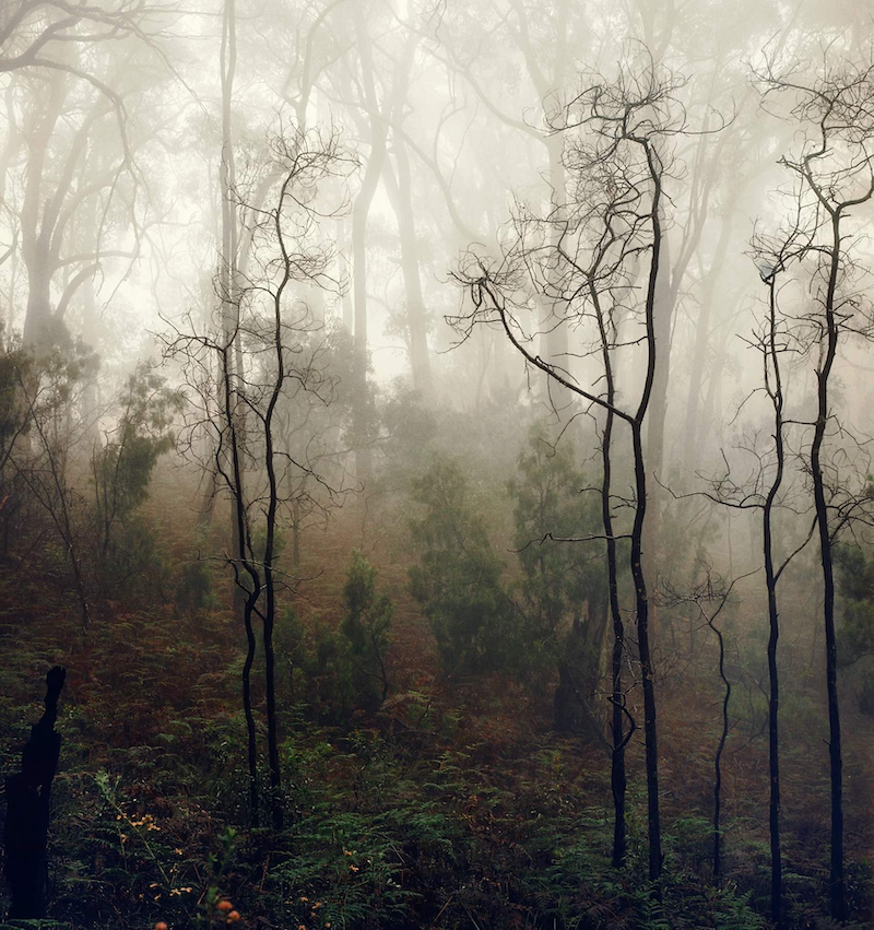 (CreativeWork) Tall Skinny Trees by Alex Frayne. photograph. Shop online at Bluethumb.
