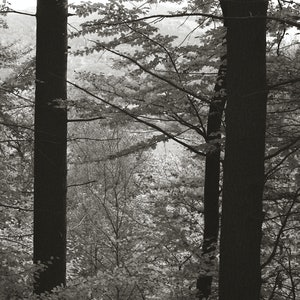 (CreativeWork) Through the trees, North Wales, SS006 Ed. 17 of 50 by Simon Greetham. photograph. Shop online at Bluethumb.