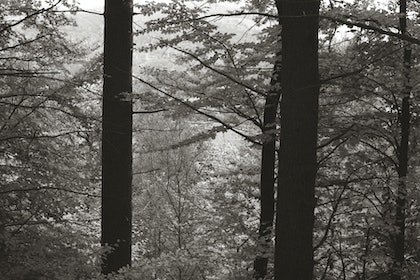 (CreativeWork) Through the trees, North Wales, SS006 by Simon Greetham. photograph. Shop online at Bluethumb.