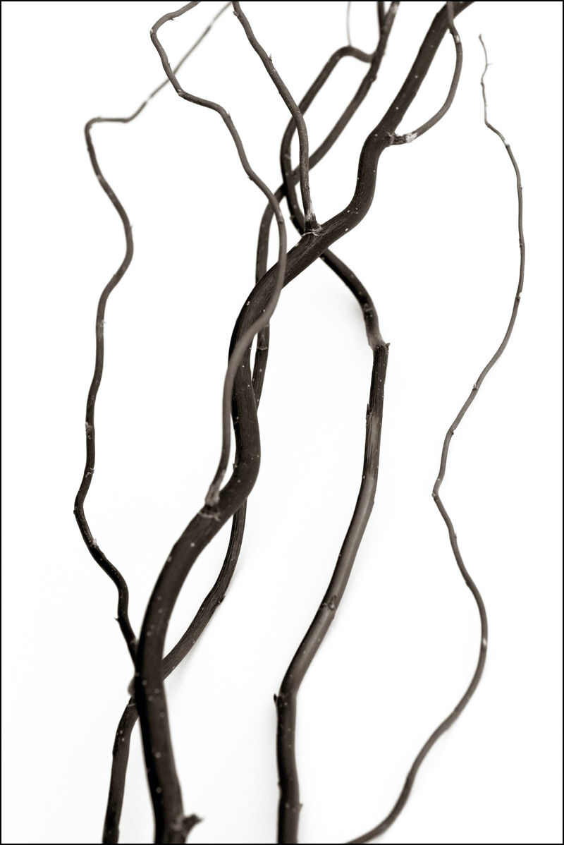 (CreativeWork) Bare branches, still life, SS004 by Simon Greetham. photograph. Shop online at Bluethumb.