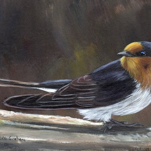 (CreativeWork) Welcome Swallow by Janet Graham. arcylic-painting. Shop online at Bluethumb.