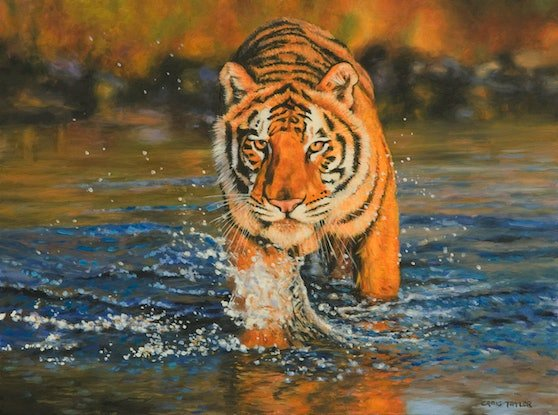 (CreativeWork) Bengal Tiger Crossing A Stream by Craig Taylor. Oil Paint. Shop online at Bluethumb.