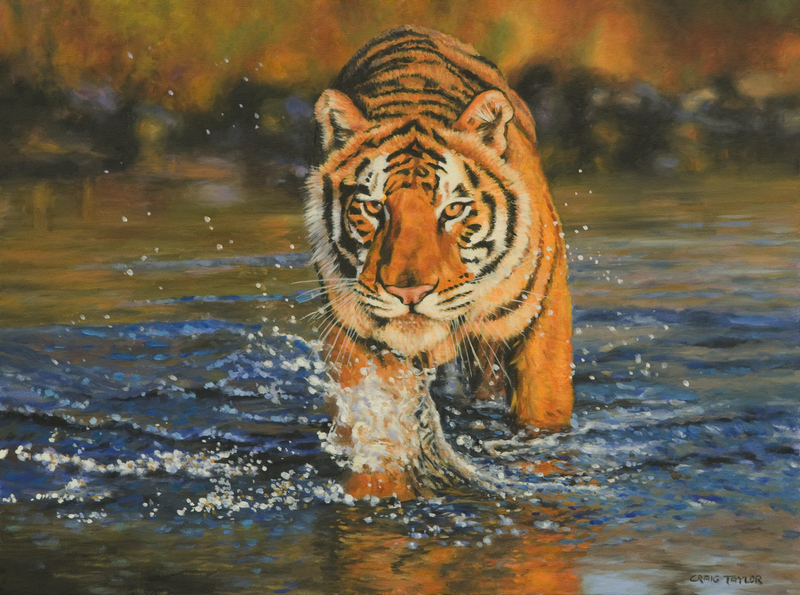 (CreativeWork) Bengal Tiger Crossing A Stream by Craig Taylor. oil-painting. Shop online at Bluethumb.