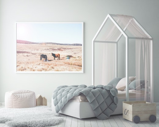 (CreativeWork) Brumbies on the Monaro by Sophie Rogers. Photograph. Shop online at Bluethumb.