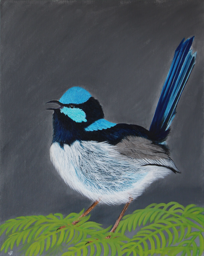 (CreativeWork) Blue Wren by SUDAY AA. arcylic-painting. Shop online at Bluethumb.