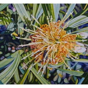 (CreativeWork) Ashy Leaved Hakea cinerea - Limited edition print 1 of 50 Ed. 1 of 50 by Delma White. print. Shop online at Bluethumb.