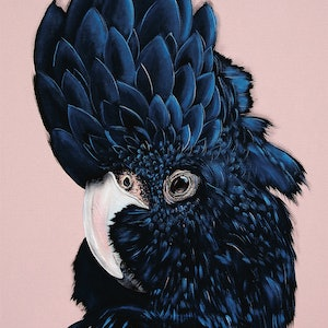 (CreativeWork) Alva The Black cockatoo A2 Ed. 6 of 50 by HEYLIE MORRIS. print. Shop online at Bluethumb.