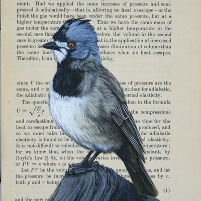 """(CreativeWork) Crested Bellbird on vintage (1910) book page from """"A Text-Book of Physics - Chapter: The Velocity of Sound"""" by Craig Williams. Acrylic Paint. Shop online at Bluethumb."""