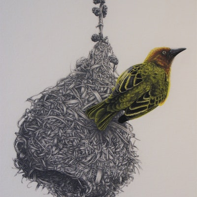 (CreativeWork) The Weaver by Craig Williams. Drawings. Shop online at Bluethumb.