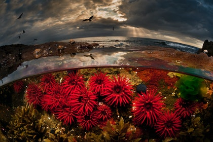 (CreativeWork) Crimson Dawn by Matty Smith. photograph. Shop online at Bluethumb.