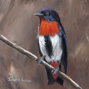 (CreativeWork) Mistletoebird by Janet Graham. arcylic-painting. Shop online at Bluethumb.
