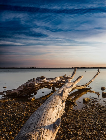 (CreativeWork) Dead Tree, Lake King by Piers Buxton. photograph. Shop online at Bluethumb.