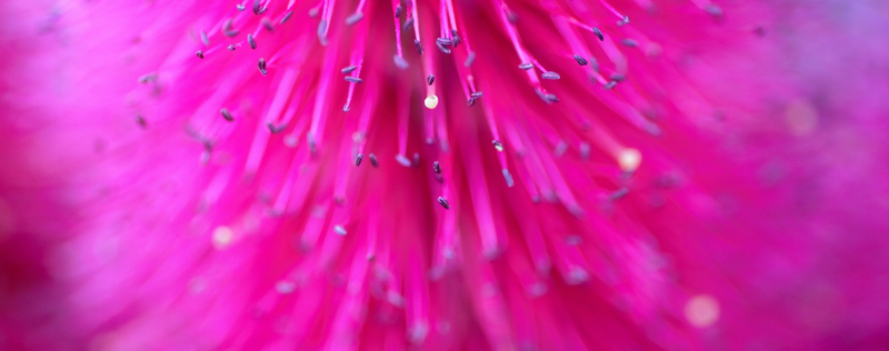 (CreativeWork) Pink Delight by Aileen Newell. photograph. Shop online at Bluethumb.
