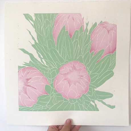 (CreativeWork) Protea   Pink Ed. 4 of 50 by Elizabeth MacDougall. Print. Shop online at Bluethumb.