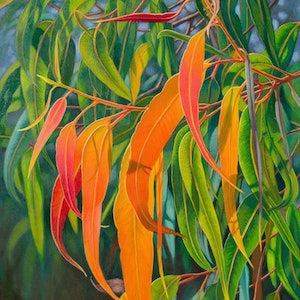(CreativeWork) Sunlit Gumleaves 18 by Fiona Craig. #<Filter:0x00007f1f9490af00>. Shop online at Bluethumb.