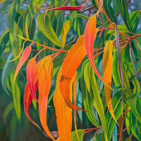 (CreativeWork) Sunlit Gumleaves 18 by Fiona Craig. Oil Paint. Shop online at Bluethumb.