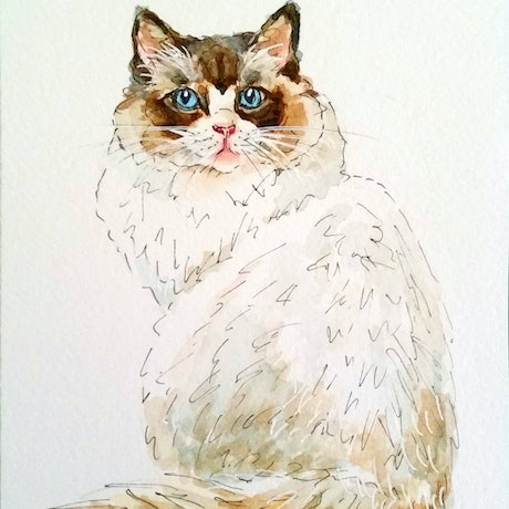 (CreativeWork) Ragdoll Cat 1 - Framed by Olga Kolesnik. Watercolour Paint. Shop online at Bluethumb.