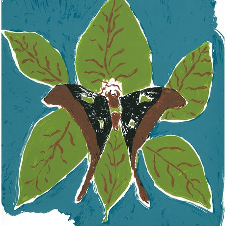 (CreativeWork) Hercules Moth 2/15 (Limited Edition Screen Print)  by Theresa Beeron. Other Media. Shop online at Bluethumb.