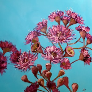 (CreativeWork) Pink Eucalyptus Gum Blossoms Oil Painting by Chris Hobel. oil-painting. Shop online at Bluethumb.